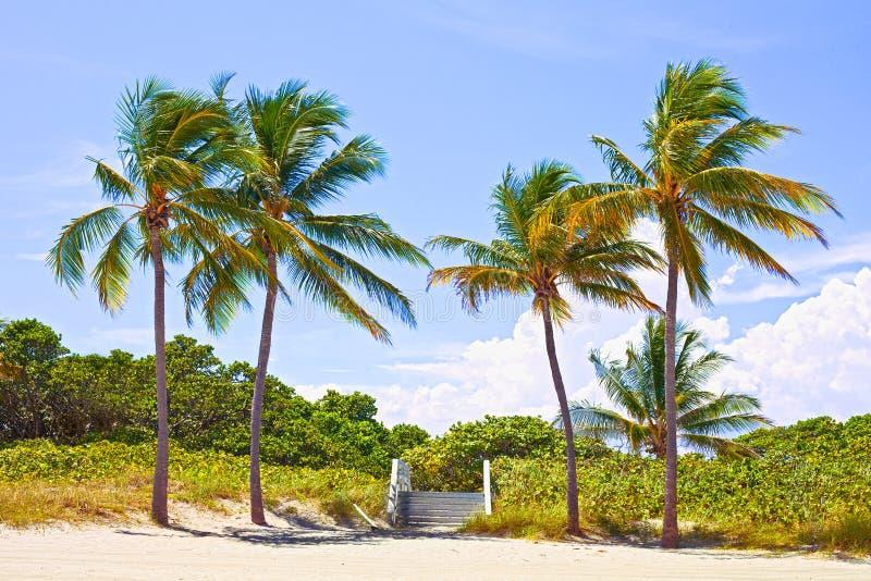 在一个美好的晴朗的夏天下午的棕榈树 库存图片