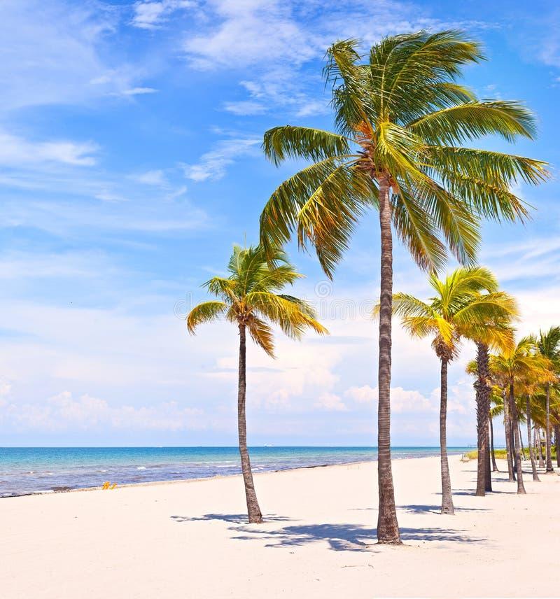 在一个美好的晴朗的夏天下午的棕榈树 免版税图库摄影