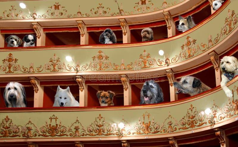 在一个老剧院的loges的狗 库存照片