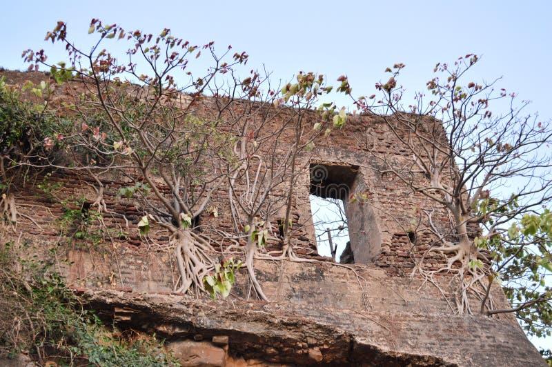 在一个老堡垒的墙壁, Valsad,古杰拉特上的树 免版税库存照片