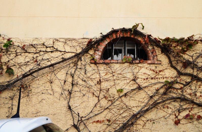 在一个老大厦的墙壁上的老半圆窗口,长满与攀登凋枯的植物,文本的,法式自由空间 库存照片