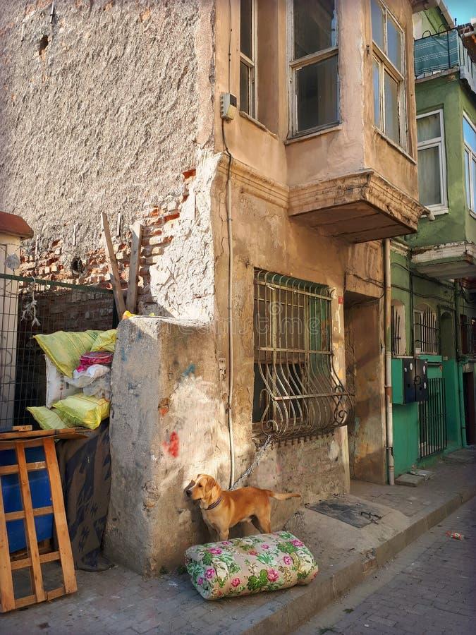 在一个老房子前面的被束缚的狗 免版税图库摄影