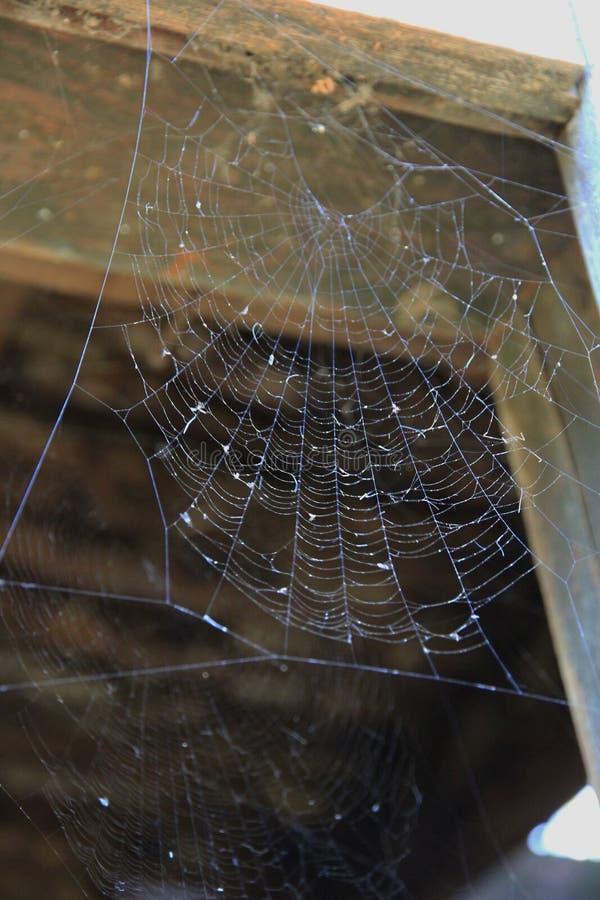 在一个老残破的窗口的蜘蛛网 免版税库存图片
