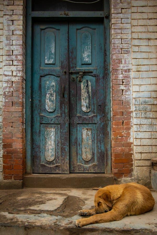 在一个老蓝色门前面的流浪狗 免版税库存图片