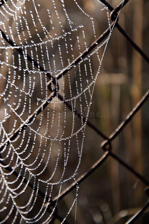 弗罗斯特蜘蛛网在一个冷的早晨 在一个老铁丝网上的蜘蛛网 蜘蛛网,与水下落的spiderweb 库存图片