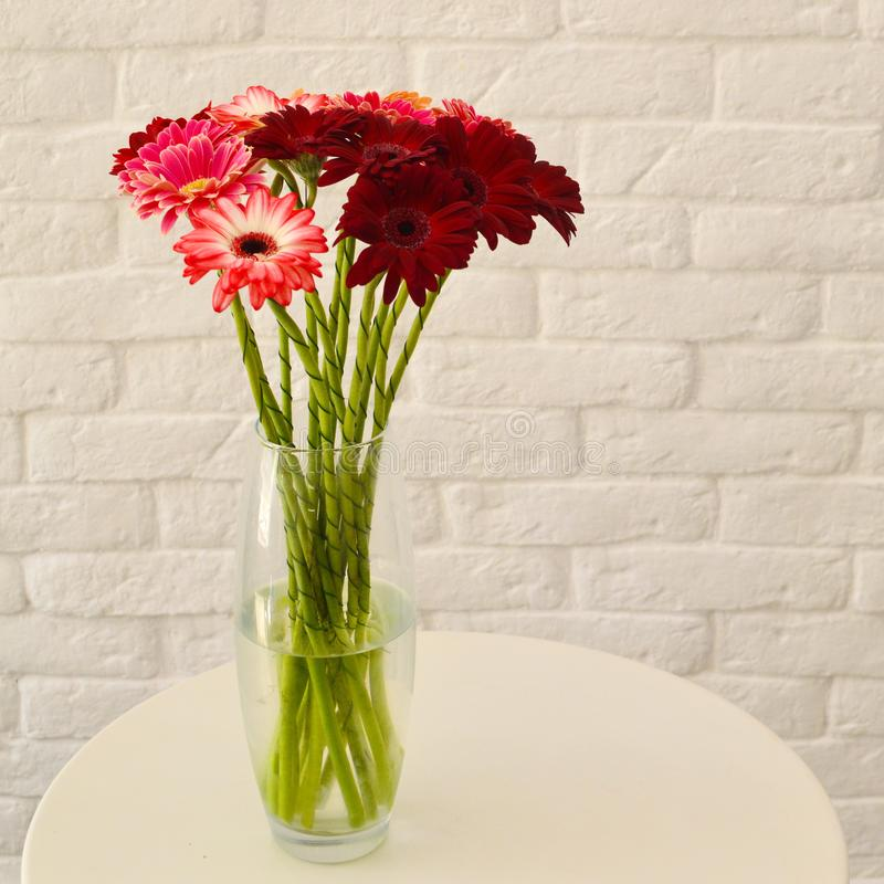 在一个花瓶的多彩多姿的大丁草在白色背景 库存照片