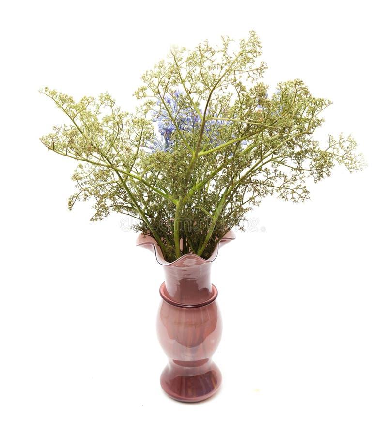 在一个花瓶的干花在白色背景 库存照片