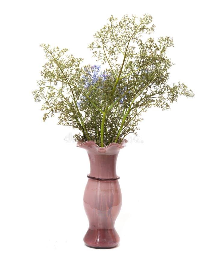 在一个花瓶的干花在白色背景 图库摄影