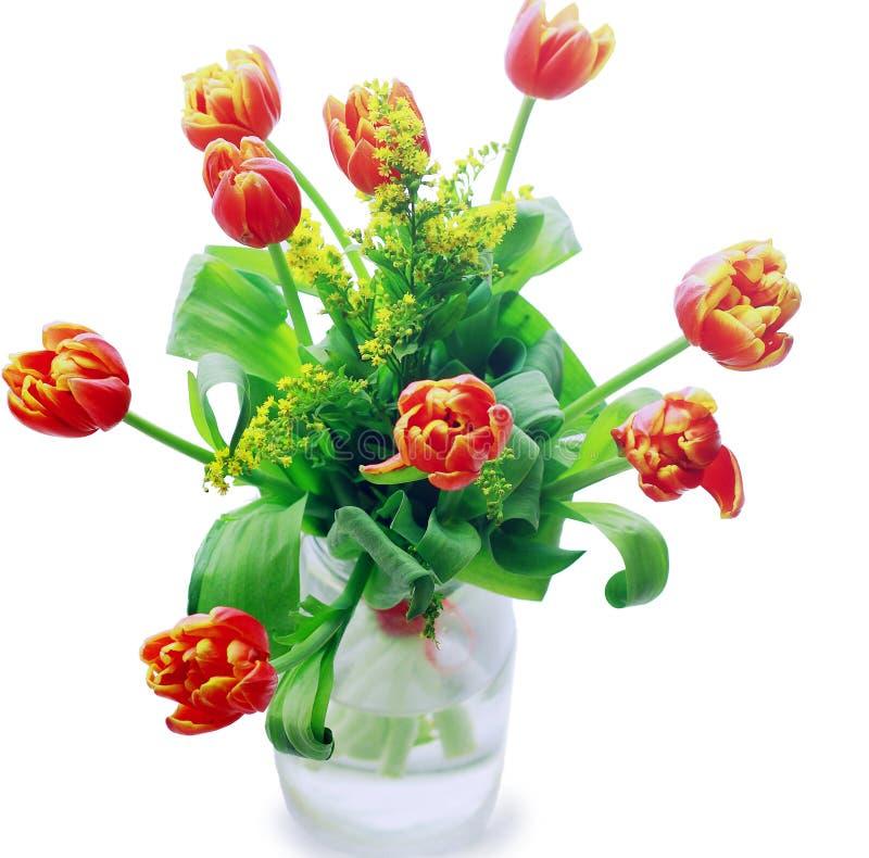在一个花瓶的郁金香在一个空白背景 免版税库存照片