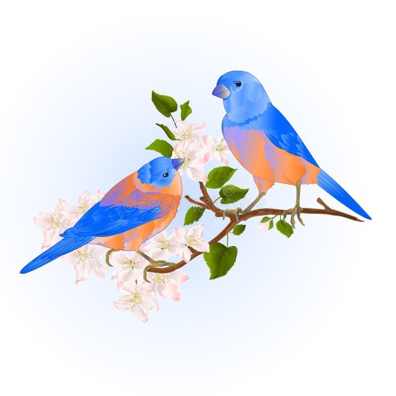 在一个苹果树分支的蓝鸫鹅口疮小songbirdons用花葡萄酒传染媒介例证编辑可能的手画 皇族释放例证