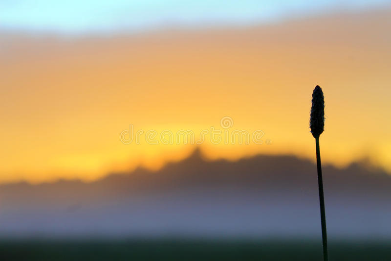 在一个草甸的日落薄雾的 免版税图库摄影