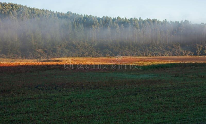在一个草甸的早晨薄雾有一个森林的在背景中在湖Hauruko附近在南方在新的Nthe南岛 免版税图库摄影