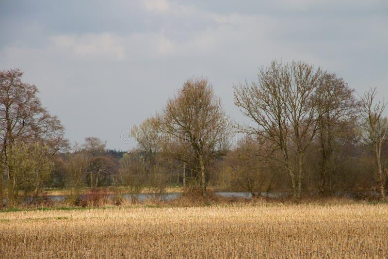 在一个被割的领域的看法和树和海rhede emsland的德国 库存照片