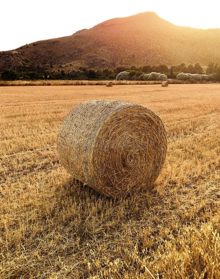 在一个被收获的领域的干草捆在马略卡海岛上的日落 库存图片