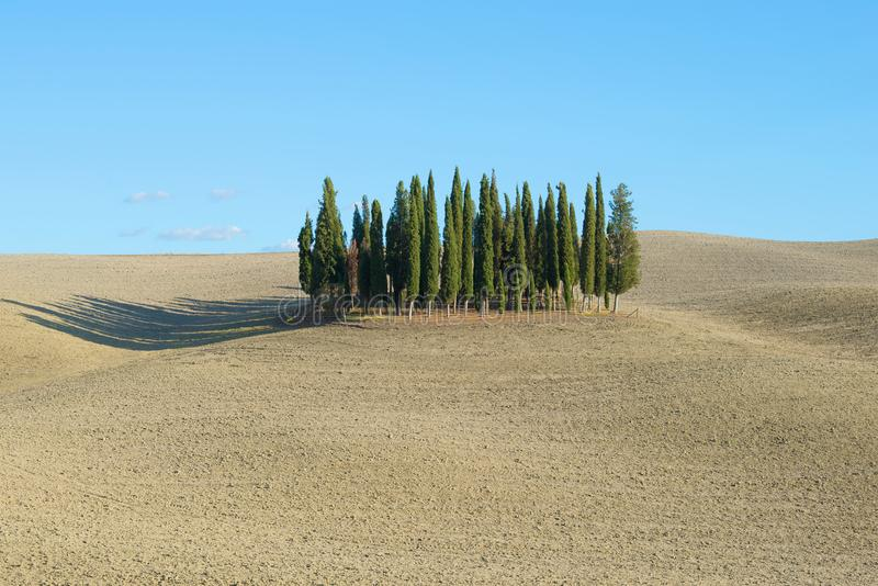 在一个被犁的领域中间的赛普里斯树丛 意大利托斯卡纳 免版税库存照片