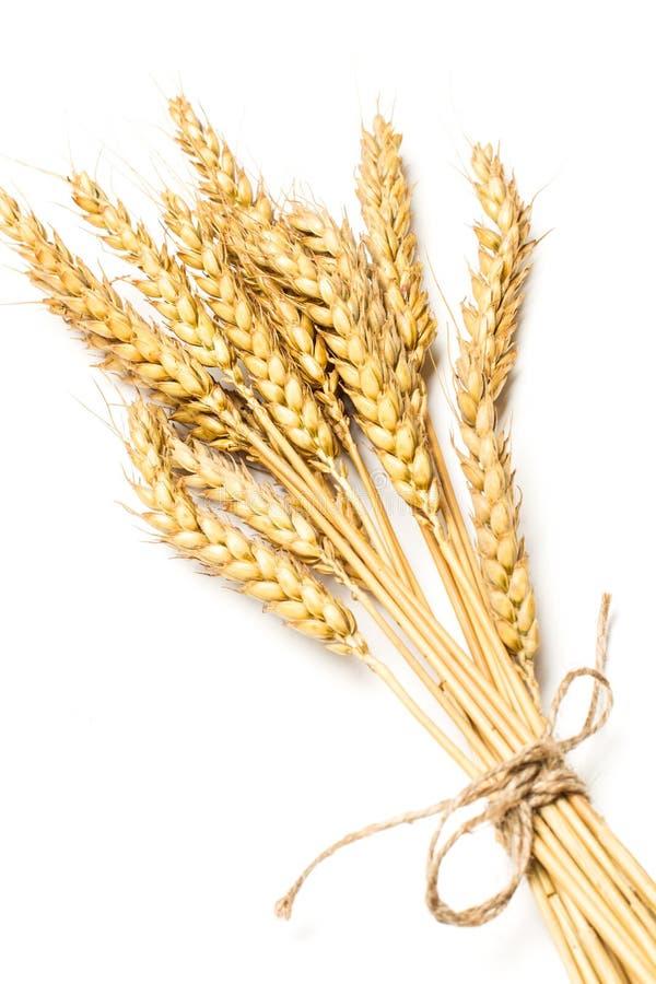 在一个被隔绝的看法的麦子茎 免版税库存照片