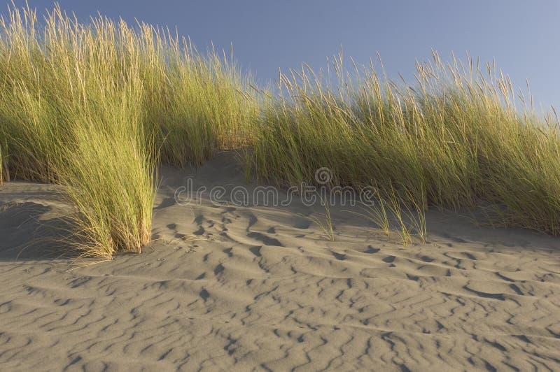 在一个被风吹扫海滩的海滩草 免版税库存照片