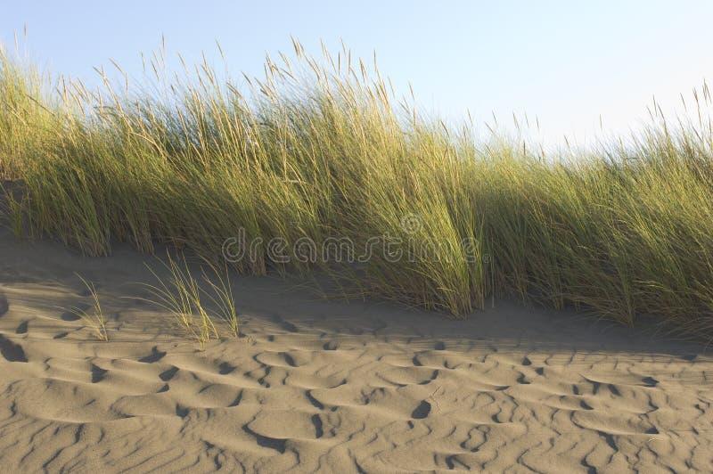 在一个被风吹扫海滩的海滩草 库存图片