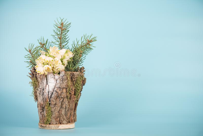 在一个装饰花瓶的Leucojum vernum,演播室射击 是第一春天雪花 国际妇女天题材  图库摄影