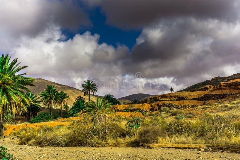 在一个贫瘠风景的棕榈树 免版税图库摄影