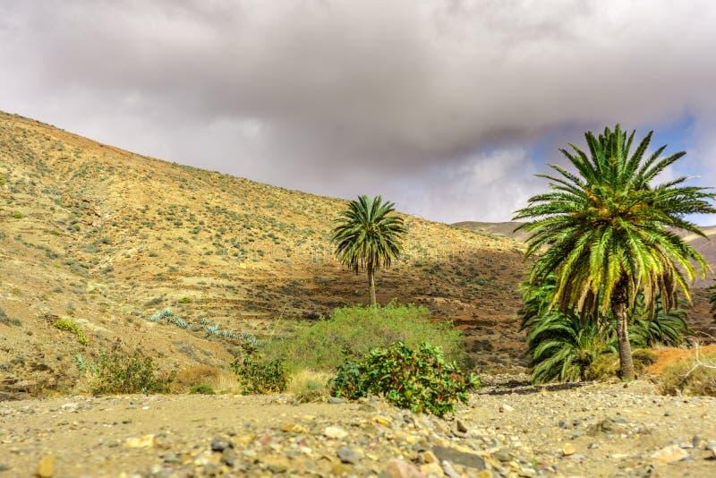 在一个贫瘠风景的棕榈树 图库摄影