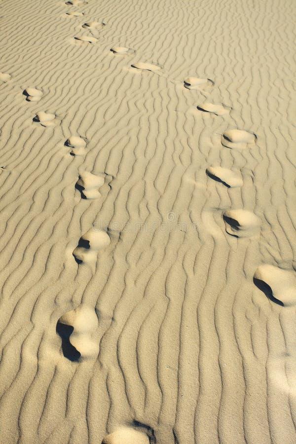 在一个起皱纹的晴朗的海滩的足迹 图库摄影