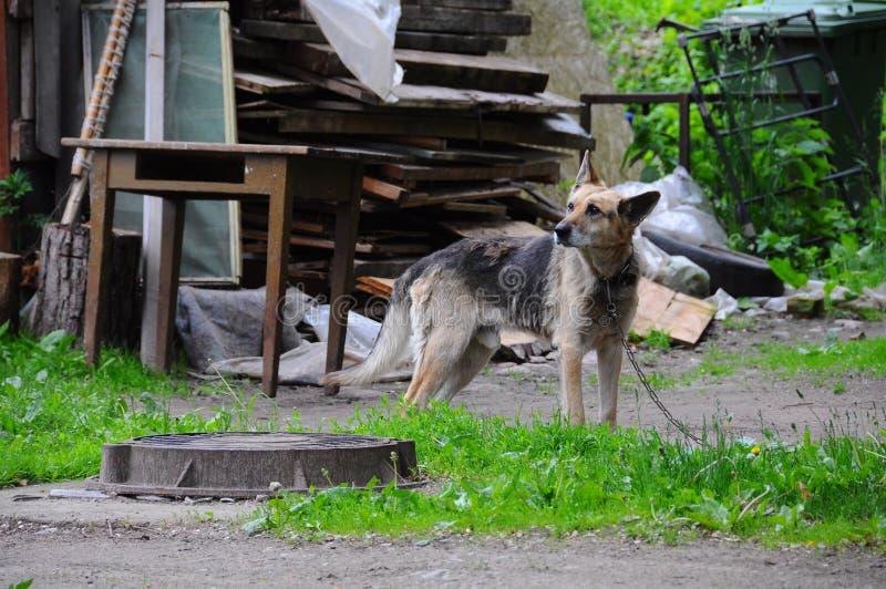 在一个链子的狗在landfil附近 免版税库存图片