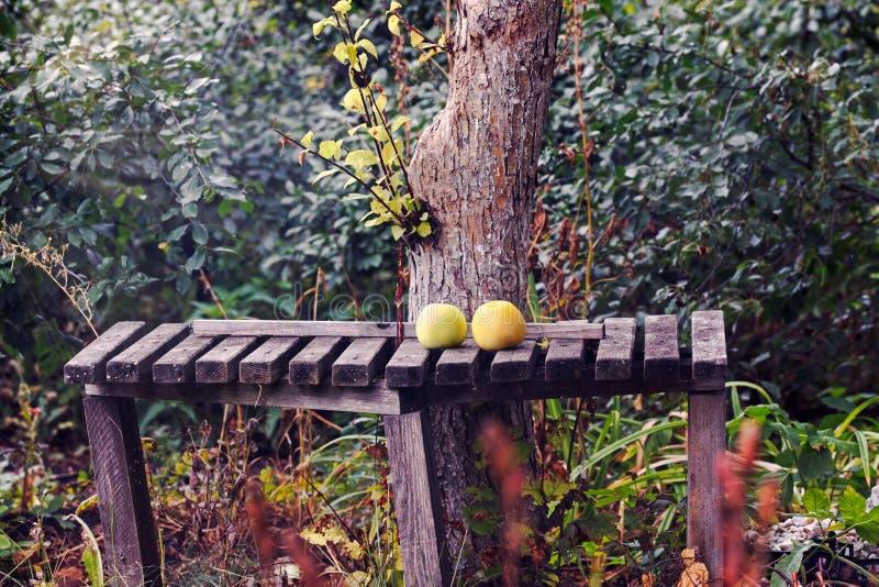 在一个长木凳的新鲜的苹果在庭院里 免版税库存照片