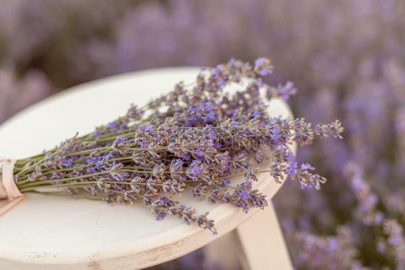 在一个长木凳的淡紫色花束在淡紫色领域 库存图片