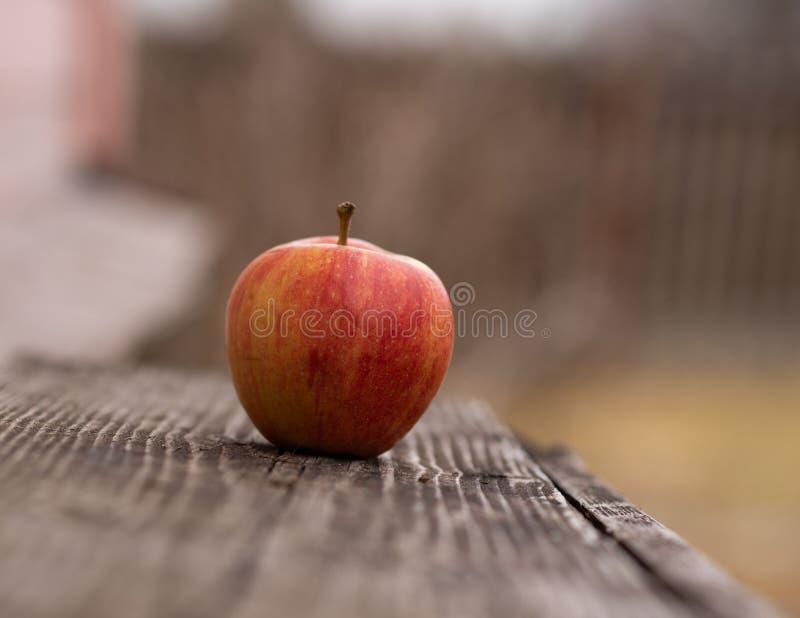 在一个长木凳的苹果计算机在户外秋天 库存照片