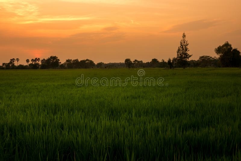 在一个领域在乡下,自然日落日出Ove的日落 库存图片