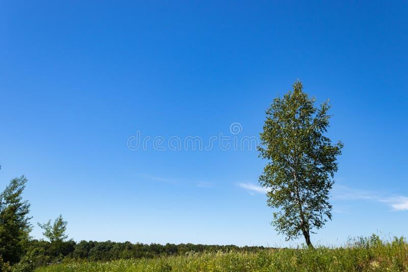 在一个领域的一棵偏僻的树在一明亮的好日子 ?? 莫斯科地区俄罗斯 免版税库存照片