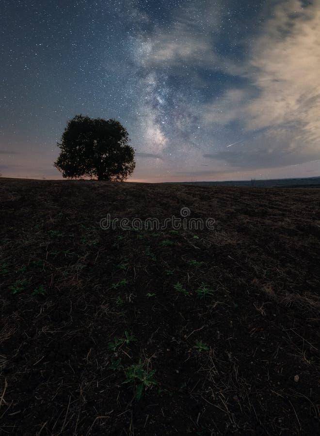 在一个领域的偏僻的树在银河下 免版税库存照片
