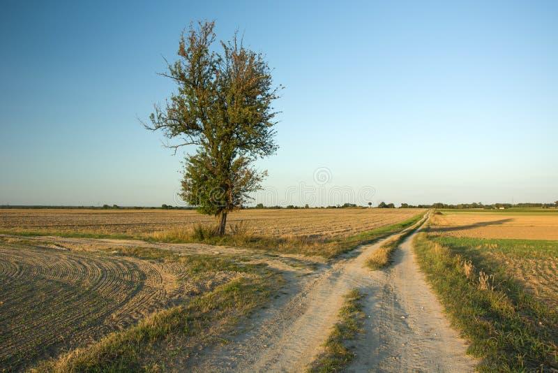 在一个领域的树在交叉路 库存图片