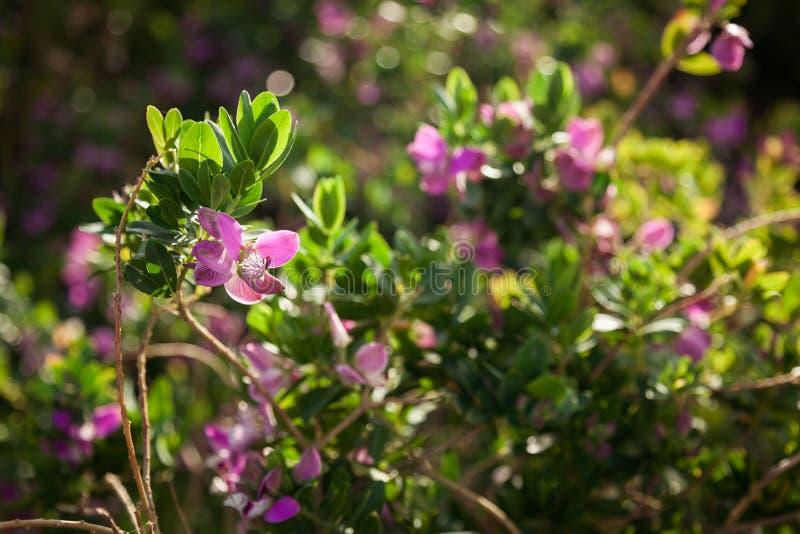 在一个领域的桃红色花在绿草中 免版税库存图片