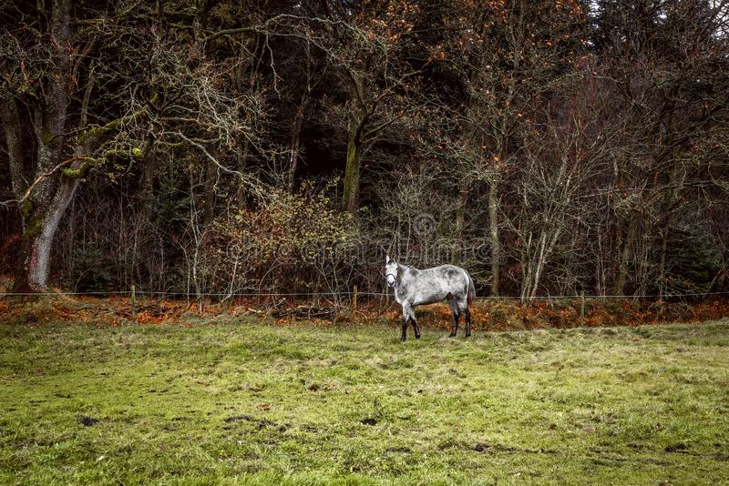 在一个领域的白马与篱芭 图库摄影