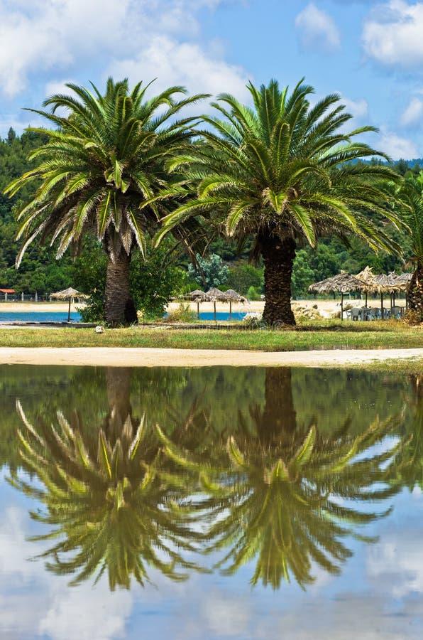 在一个水坑的棕榈树反射在夏天风暴以后 免版税库存照片