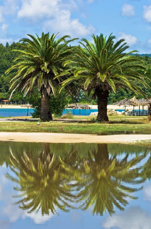 在一个水坑的棕榈树反射在夏天风暴以后 免版税库存图片