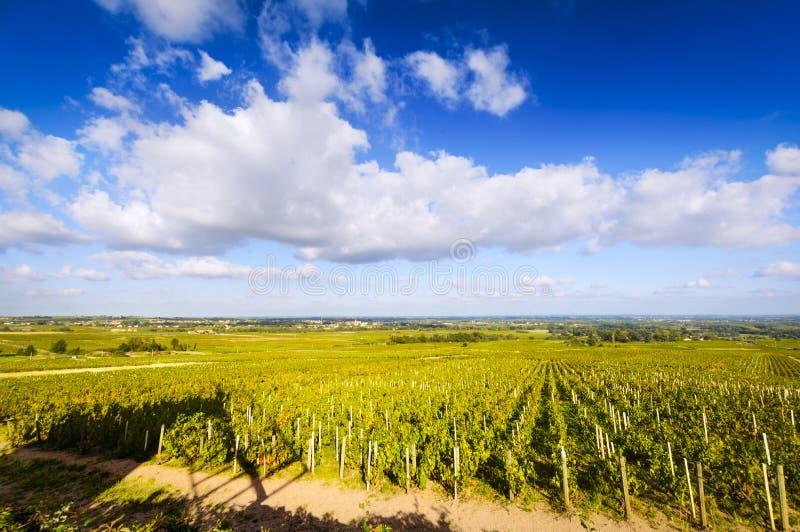 在一个晴天期间,博若莱红葡萄酒,法国葡萄园  库存图片