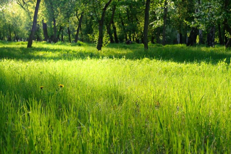 Download 在一个晴朗的草甸的绿草 库存照片. 图片 包括有 城市, 光芒, brighting, 重点, 白兰地酒 - 72362122