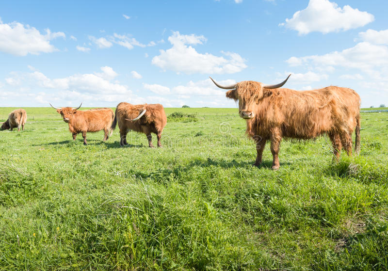 欧洲特级性交图片_图片 包括有 草原, 室外, 横向, 外套, 红色, 摆在, 欧洲 - 40991069