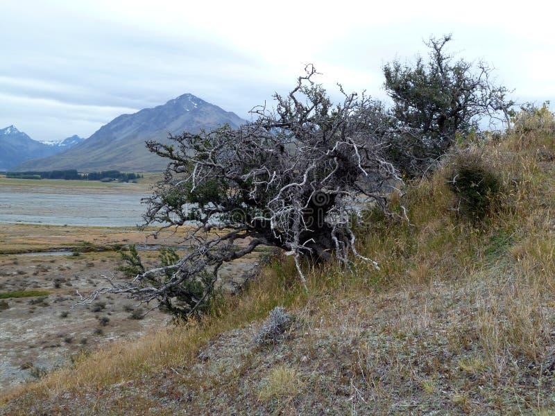 在一个贫瘠河平原和山前的死的灌木 免版税库存照片