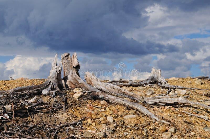 在一个死的森林上的雷云 免版税库存图片