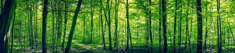 在一个绿色森林全景风景的足迹 免版税库存照片
