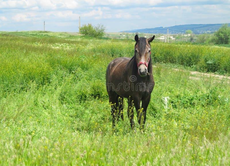 Download 在一个绿色草甸的黑马在春日 库存图片. 图片 包括有 通风, 疾驰, 绿色, 运行, 母马, 横向, 自由 - 72359335