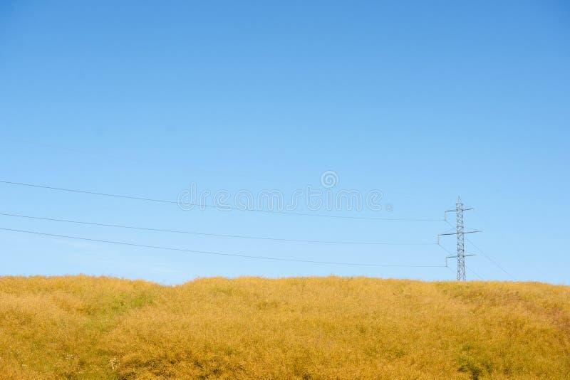 在一个黄色领域的定向塔 库存照片