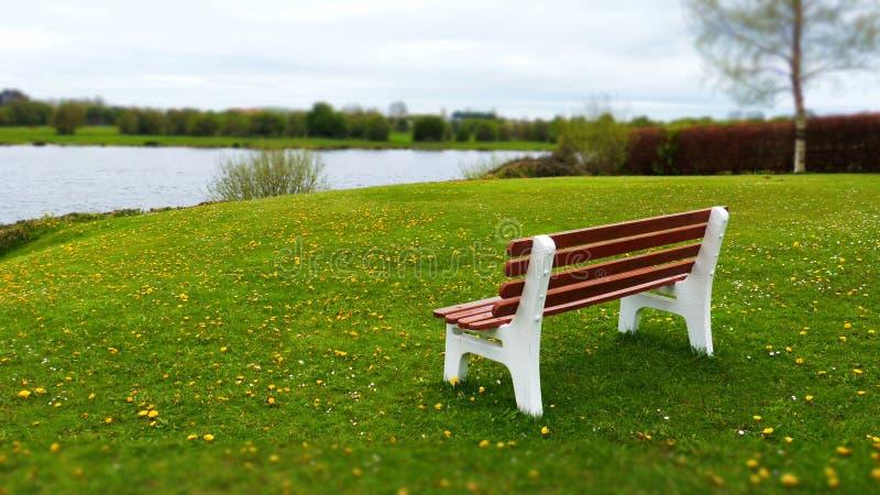 在一个绿色领域的长凳 免版税库存照片
