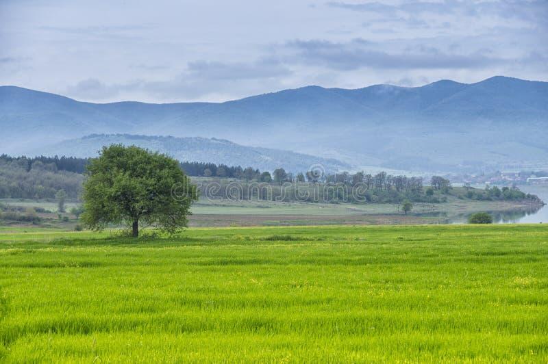 在一个绿草草甸的唯一树有山、湖、蓝天和云彩的 库存图片