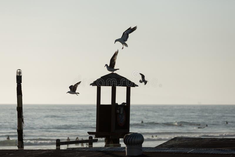 在一个ocear码头的鸟剪影在日落 免版税图库摄影