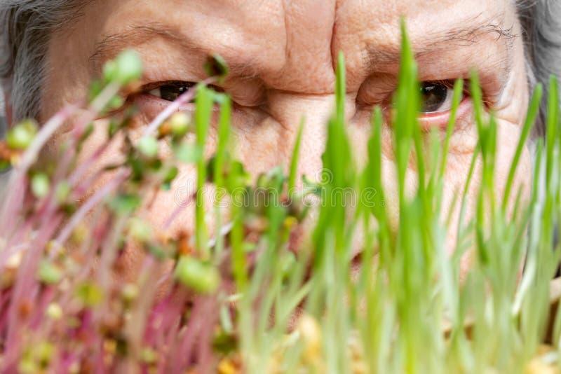 在一些新,健康microgreens后的资深妇女面孔 免版税库存图片